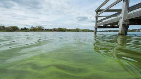 Algae visible on the surface of the water