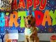Charlie's first birthday party!