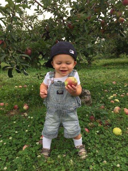 Boston enjoying some annual apple picking at Lewis