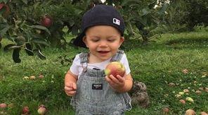 Boston enjoying some annual apple picking at Lewis