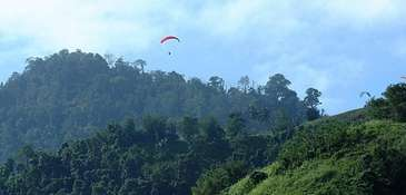 Naruto's habitat: the Indonesian island of Sulawesi.