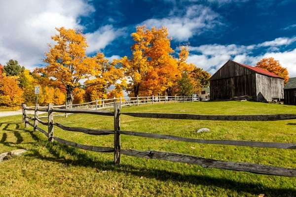 New England farm with golden sugar maples, a
