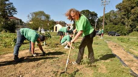 Island Harvest's Hillary Hess rakes while volunteers from
