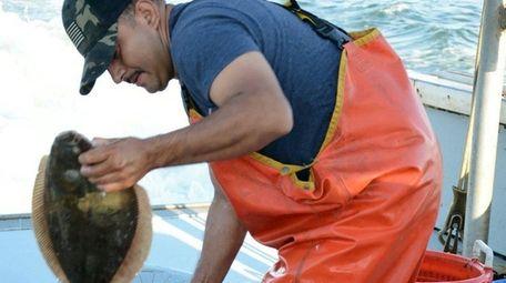Commercial fluke fisherman sorting fluke on the Long