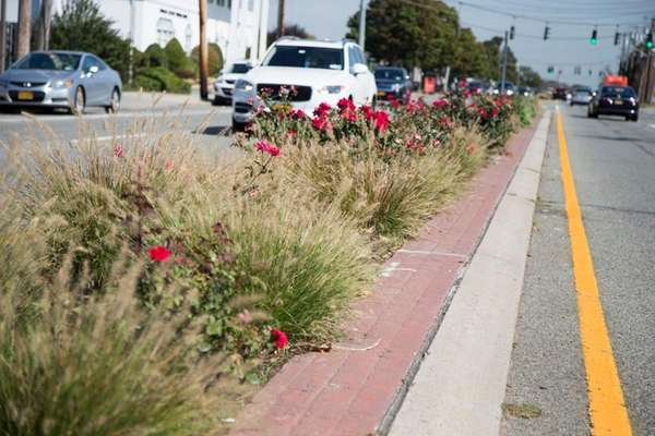 New plantings in the median on Hillside Avenue