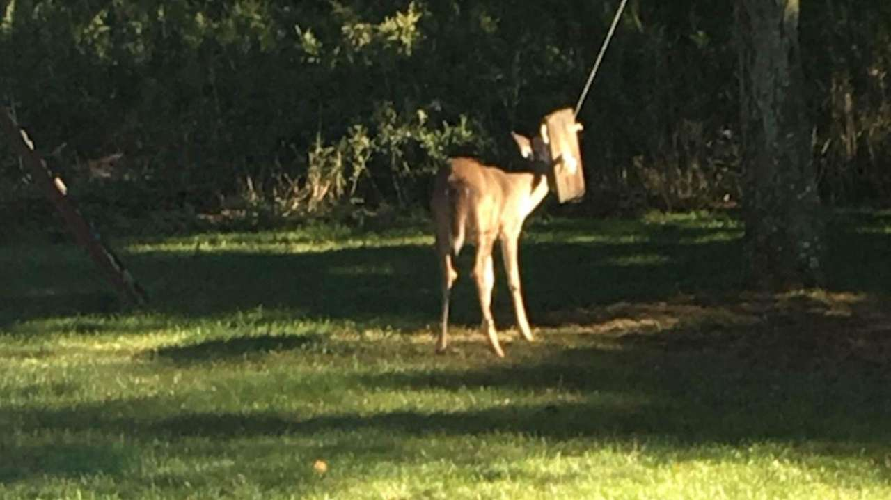 A deer was rescued after becoming trapped in