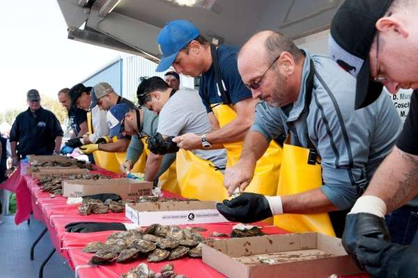 Oyster shuckers compete at the 2016 Oyster Festival
