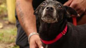 Midnight is a sweet 10-year-old female terrier mix