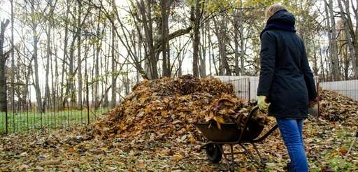 Dry leaves can be piled, watered and covered