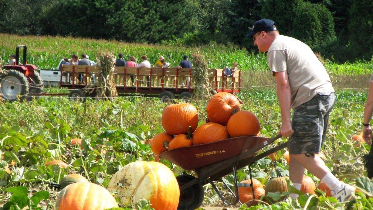 Apple And Pumpkin Picking Near Staten Island