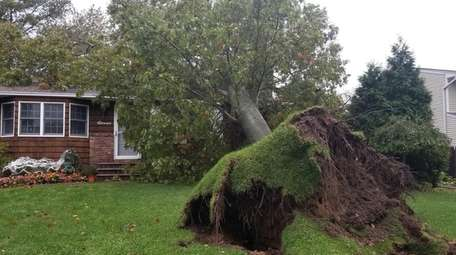 A large tree toppled by strong wind landed