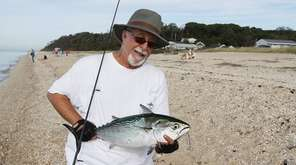 False albacore continue to feed along North Shore