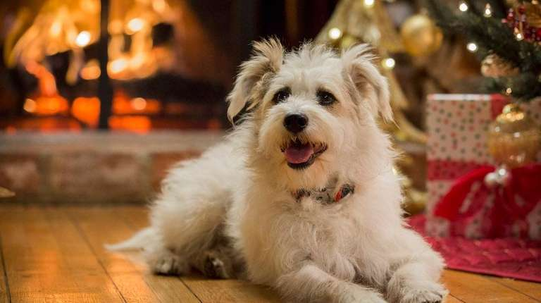 A Happy Yule Log To Air On Hallmark Channel Features Happy The Dog