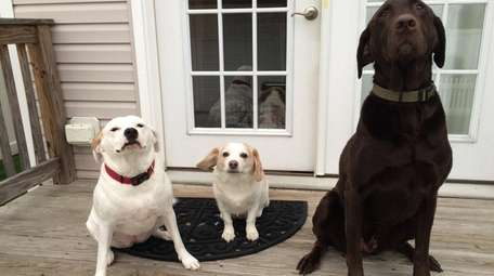 Layla, Eddie and Rocco are pets of Kidsday