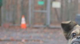 Georgette is a 2-year-old Pekingese mix. She was