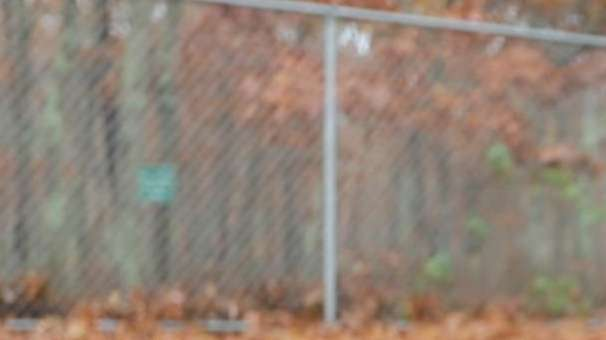 Teva, a 4-year-old Chihuahua mix, is a shy