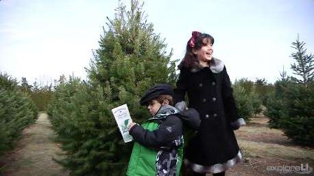Shamrock Christmas Tree Farm in Mattituck offers visitors