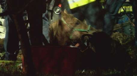 Authorities say a horse was pulled from a
