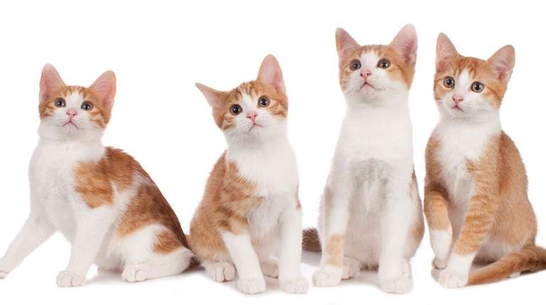 Books for cat care are great holiday presents | Newsday