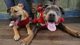 On Saturday, Dec. 16, the Harbor Pet store in Greenport