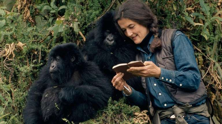 Dian Fossey with mountain gorillas in