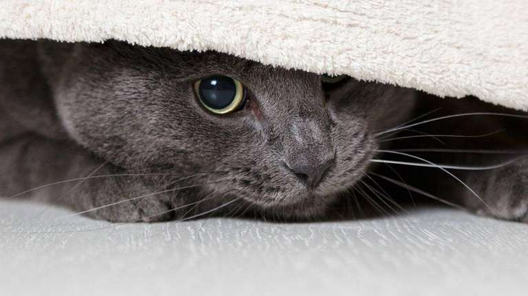 A cat hiding under a bed.