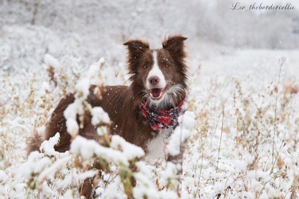 Leo walking in a winter wonderland.