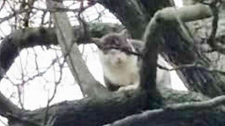 A cat trapped in a tree on Bailey