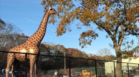 The winning bidder for the 18-foot tall giraffe