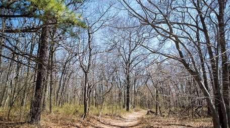 A move to expand Long Island's pine barrens