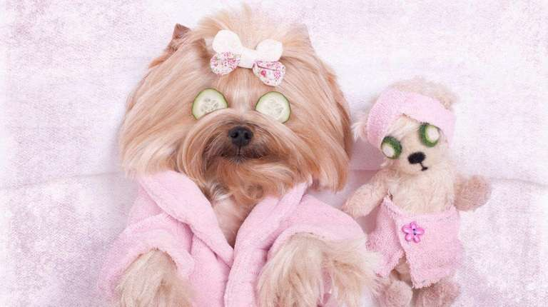 Pampering your pet can be expensive; be sure