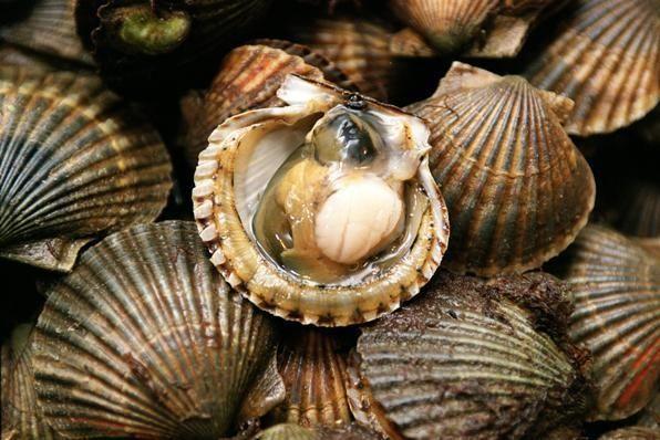 Peconic Bay scallops at Alice's Fish Market at