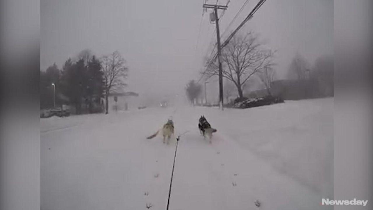 Paul Kearney, an Islip dog trainer, trained his