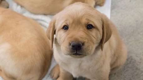 The Guide Dog Foundation is looking for Long