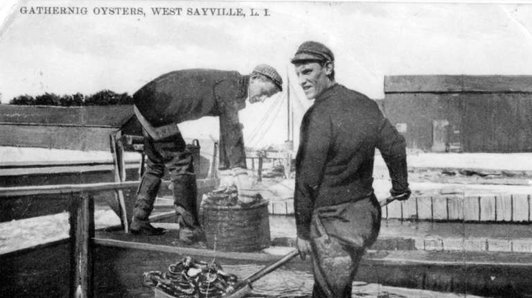 Baymen gather oysters in West Sayville in 1917.