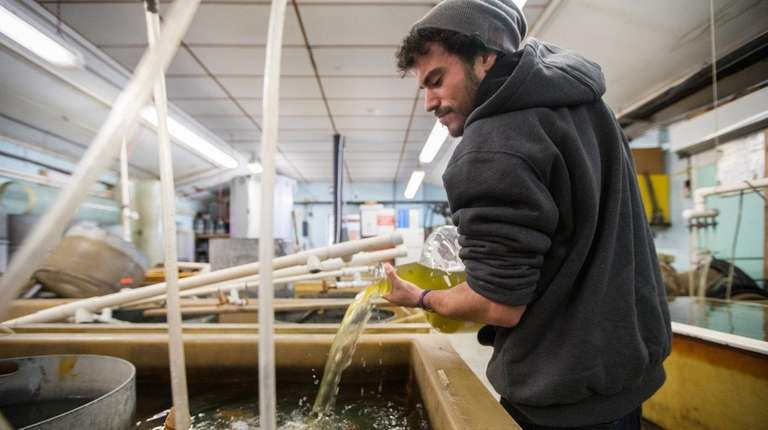 Joshua Perry, 26, a hatchery technician at the
