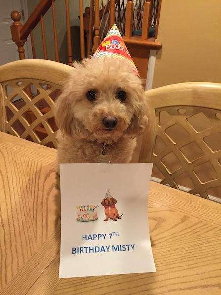 Your Dogs Birthday Photos