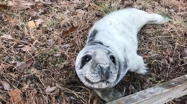 A seal pup was rescued from the side
