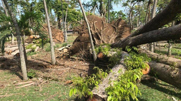 Storm damage in Luis Munoz Rivera Park that