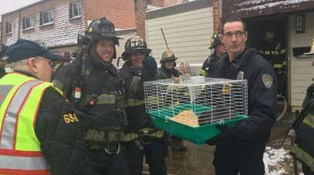 A pet rabbit was rescued from a Long