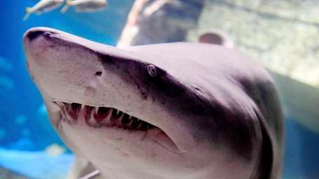 Take in some Zs near the shark tank