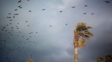 Birds fly over the old port of Cesarea,