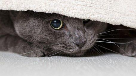 When a cat suffers a trauma, it needs