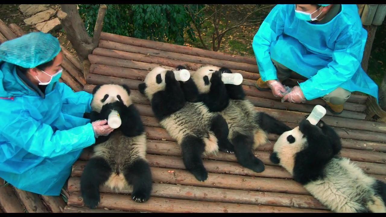 pandas movie trailer newsday