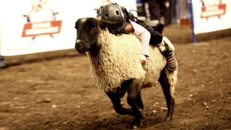 Bianca McEvoy, of East Norwich, rides a sheep