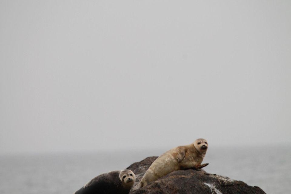 2 Seals, Rocking Out, Feburary , Montauk Light