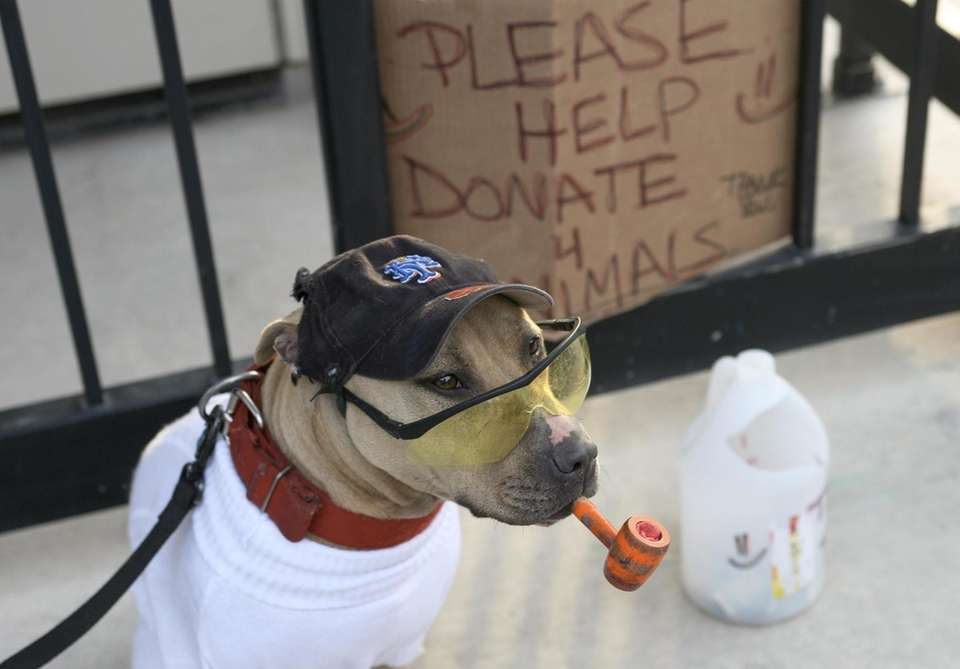 A dog named Coffee looks for donations as