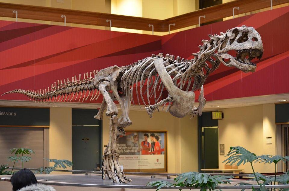 Many Seawolves often mistake the Majungasaurus crenatissimus in