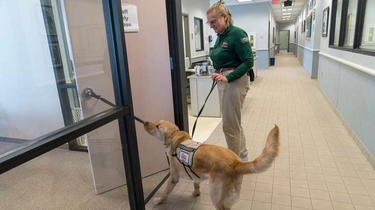 Kevin, a year-old golden lab mix, opens a