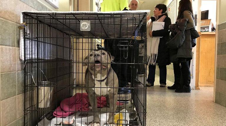 The Hempstead Animal Shelter on Feb. 1, 2018.